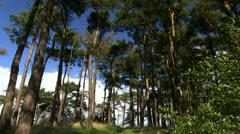 Amidst the trees on Bromlow Callow, Shropshire Stock Footage