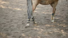 Girl lead horse by sand equestrian field at sunny summer day Stock Footage