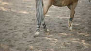 Stock Video Footage of Girl lead horse by sand equestrian field at sunny summer day