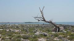 Rocky island and old trunk Stock Footage