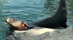 Seals (California Sea Lions) On Rocks In Beautiful Green Waters Stock Footage