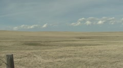 P02027 Zoom in on Pronghorn Antelope in Great Plains Grassland Stock Footage