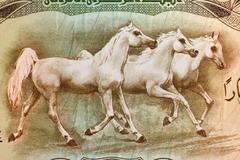 Arabian Horses on 25 Dinars 1978 Banknote from Iraq - stock photo