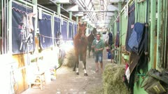 Wranglers clean horses in barn on international competitions Stock Footage