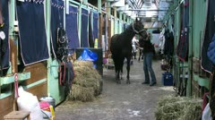 Wrangler clean horse in barn on international competitions - stock footage