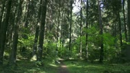 Beautiful forest Stock Footage