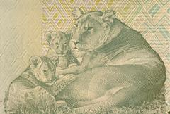 Lioness Lying with two Cubs on 20 Francs 2003 Banknote from Congo - stock photo