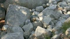 Marmot Stock Footage
