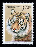 China - circa 2000: a stamp printed in china shows panthera tigris altaica, s Stock Photos