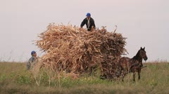 carriage horse fall in agricultural labor - stock footage