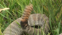 P02065 Closeup of Rattlesnake Rattles Rattling - stock footage