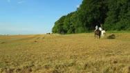 Stock Video Footage of Horse Ride Over Corn Field