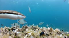 Diver fish and shells Stock Footage