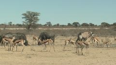 P02085 African Wildlife at Waterhole in the Dry Season - stock footage