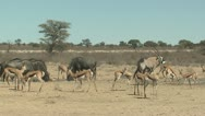 Stock Video Footage of P02085 African Wildlife at Waterhole in the Dry Season