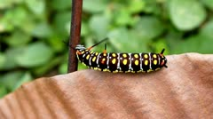 Caterpillar moving Stock Footage