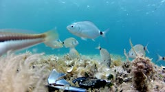Fish eating on seabed Stock Footage