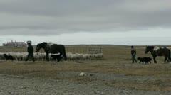 Shepherds herd sheep along dusty highway in Patagonia Stock Footage