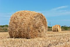 Stacks of straw on sloping wheat field Stock Photos