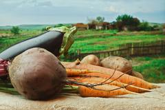 Vegetables on the background of rural areas Stock Photos