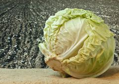cabbage on the background of agricultural lands - stock photo