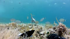Fish eating the shell Stock Footage