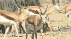 P02086 African Wildlife at Waterhole in the Dry Season - stock footage