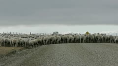 Shepherd and sheep dogs at work in Patagonia Stock Footage