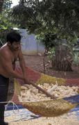 Guatemala man male removing corn from husk santa Stock Photos