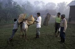 guatemala loading ponies alto verapaz people - stock photo