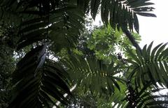 Guatemala rainforest detail peten country nation Stock Photos