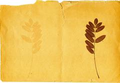 plant on a old torn paper - stock photo