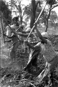 labor kikuyu women females farming meru kenya - stock photo
