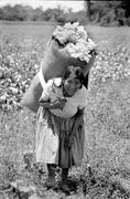 Labor worker on coffee estate carrying big load Stock Photos