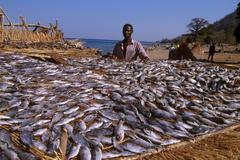mozambique fish drying on the shore of lake - stock photo