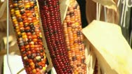 Stock Video Footage of Multicolor Corn Rack Focus