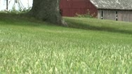 Stock Video Footage of Lawnmowing Horiz Pass Low Angle