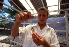 Technology technician examining plant clone los Stock Photos
