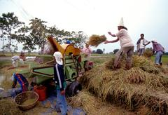 farming farmers threshing their rice with people - stock photo