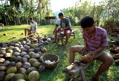 Splitting coconuts for copra bolton davao del Stock Photos