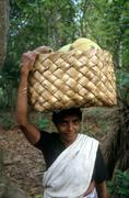 india farming woman female carrying coconuts - stock photo