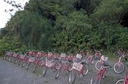 Stock Photo of red bicycles parked line jamaica rentals bikes