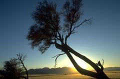trees arid landscape namib naukluft desert dry - stock photo
