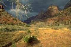 Beauty landscape zion park utah travel national Stock Photos