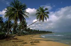 beach nature beautiful scene island tropics lush - stock photo