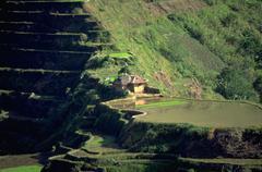 house nature green landscape rice terraces luzon - stock photo