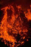 Luonto palo Oakland firestorm liekit polttava Kuvituskuvat