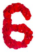 Number 6 made from red petals rose on white Stock Photos