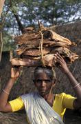 India woman female carrying firewood tiruthani Stock Photos