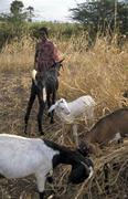 Stock Photo of india village tamil nadu 2003 worldwide